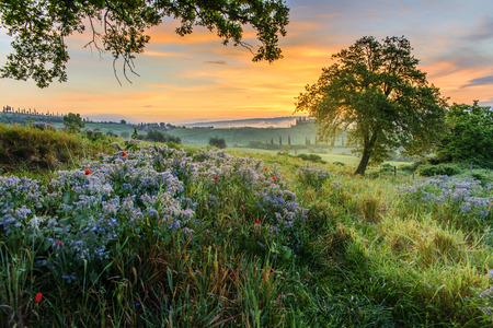Tuscan countryside photo