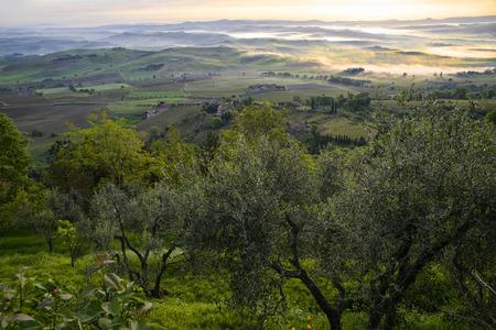 montalcino: The countryside out Montalcino Stock Photo