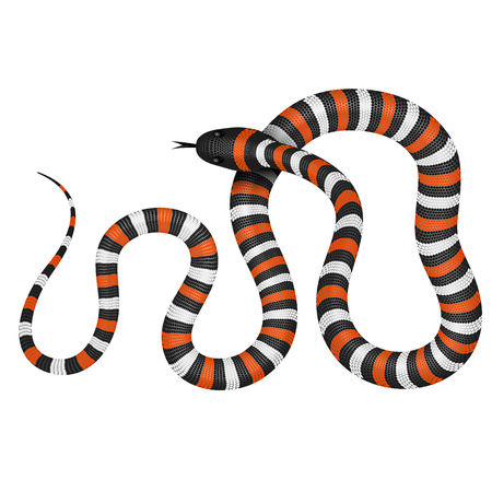 midwest: Coral snake vector illustration isolated on white.