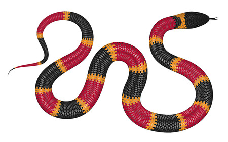 Coral snake vector illustration isolated on white background. Illustration