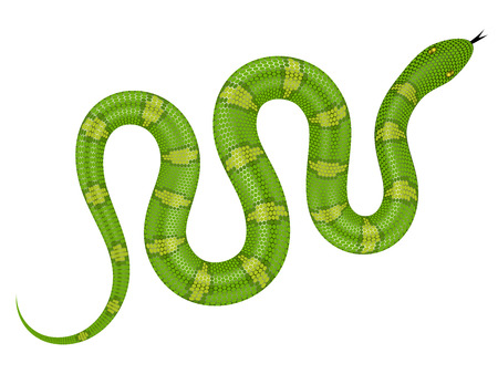 Green snake vector illustration. Isolated serpent on white background