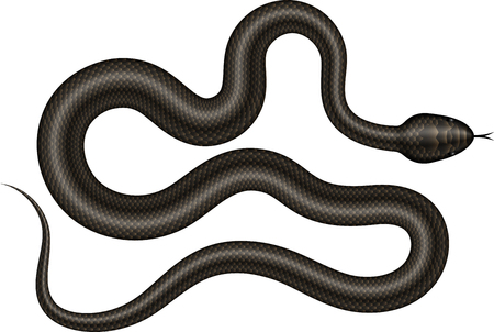 Black snake vector illustration. Isolated serpent on white background.