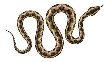 Brown python vector illustration. Isolated tropical snake on white background.