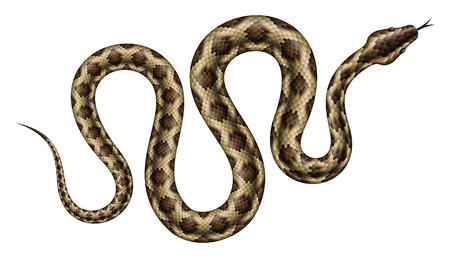 Ilustración de vector de pitón marrón. Serpiente tropical aislada en el fondo blanco.