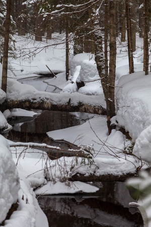 Stream in the snow-covered forest in early spring Stock Photo