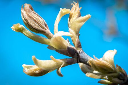 Swollen buds, first shoots, leaves and flowers in city parks and squares during the spring awakening. Foto de archivo