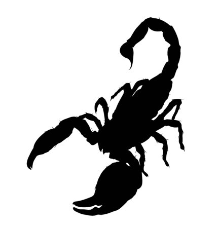 Emperor Scorpion silhouette vector illustration Stock fotó - 132221386