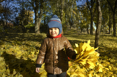 A happy child outdoors has collected a bouquet of autumn yellow leaves in the park is playing fun.