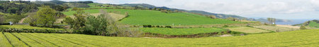 agriculture azores: The tea farm on island Sao Miguel in Azores