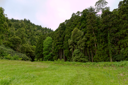 agriculture azores: Landscape, Sao Miguel, The Azores Islands, Portugal