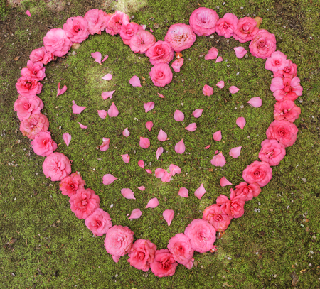Heart of roses and rose petals photo