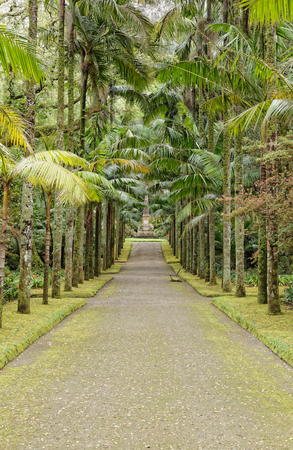 Beautiful botanic garden of Furnas photo