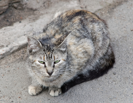 Cat outdoors photo