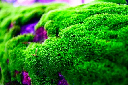 green plants: green moss, on a tree trunk. colorful, close-up.
