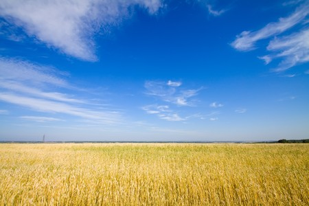golden wheat field Stock Photo - 7909744