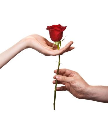 mujer con rosas: mano del hombre dando una rosa a una mujer que lleva cuidadosamente