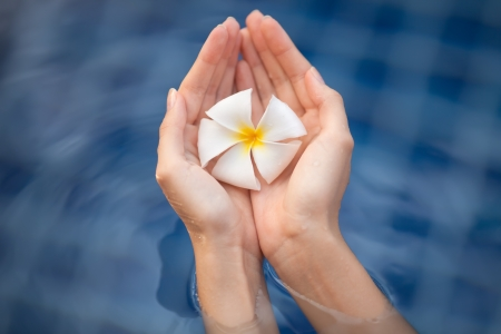 tropical flower plumeria in woman hands Stock Photo - 20950960