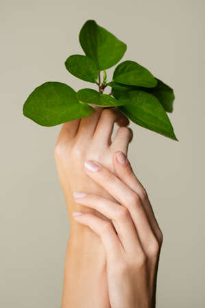 Beautiful female hands hold a green leaf. Cleanliness and care. Olive background.