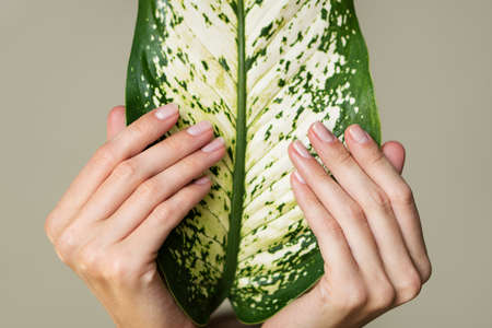 Beautiful female hands hold a green leaf. Nails and manicure. Olive background. Stock Photo
