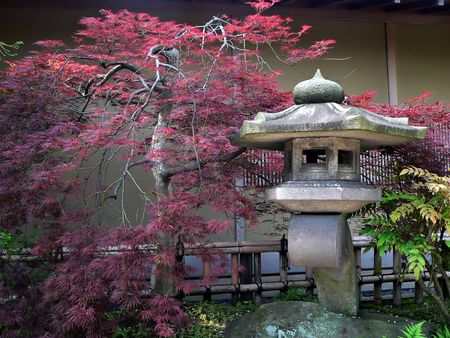 japanese lantern and red-maple tree in quiet stone garden, Tokyo Japan