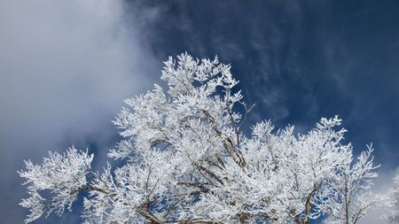 winter panoramic shot with cold blue sky, moving clouds and frosted tree branch Stock Photo - 1851199