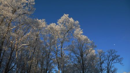 winter forest with frosted tree branches over blue sky background Stock Photo - 1851198