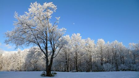 winter panoramic landscape with single frosted tree and bright blue sky Stock Photo - 1896059
