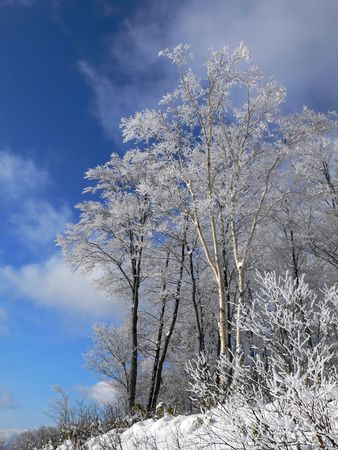 winter forest with frosted tree branches over blue sky Stock Photo - 1907786