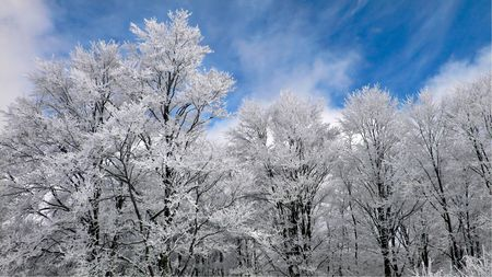 winter forest with frosted tree branches over blue sky background