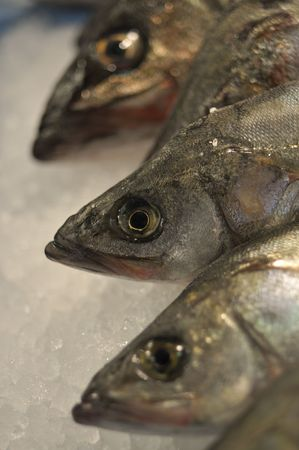 fresh fishes row at fish market on ice background; focus on middle fish Stock Photo - 3880233
