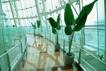 fresh and ecological architectural interior with pathway and row of green plants Stock Photo - 4035503