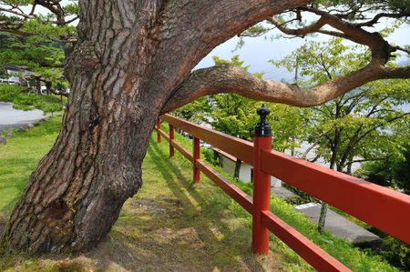 japanese temple: scenic pine tree with red fence near the Japanese temple;  focus on tree Stock Photo
