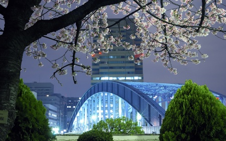 night city scenery with blossom cherry branch over metallic Eitai bridge in Tokyo Metropolis; focus on tree branches