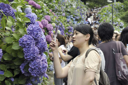 kamakura: Kamakura, Japan -June 21, 2008: Woman makes photo of the blossom  flowers to the mobile phone during Hydrangea watching festival in Kamakura town among people crowd. Traditionally this event takes place in June.