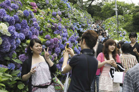 kamakura: Kamakura, Japan -June 21, 2008: couple makes photo with blossom  flowers during Hydrangea watching festival in Kamakura town among people crowd. Traditionally this event takes place in June. Editorial