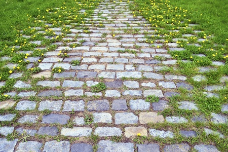 scenic cobblestone road with green grass and dandelion sprouts by springtime photo