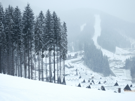 winter landscape with pine forest and mountain village on background Stock Photo - 14718900