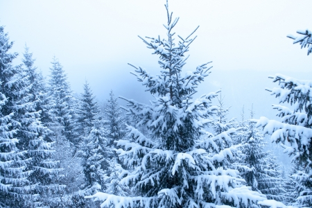 fir tree in heavy snowfall inside winter forest Stock Photo - 14718899
