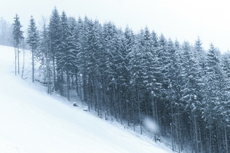 winter trees under heavy snowfall on the mountain slope Stock Photo - 14718901