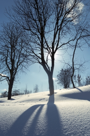 winter bare tree by bright sunny day Stock Photo - 14843580