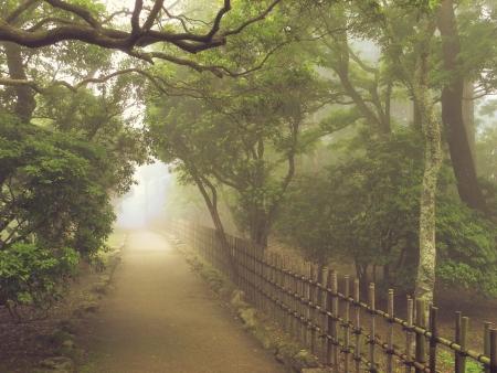 atmospheric: atmospheric way toward the light in misty park