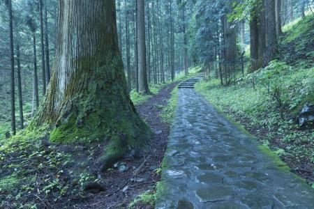 stone pathway in scenic cedar forest in Nikko, Japan Stock Photo - 15566846