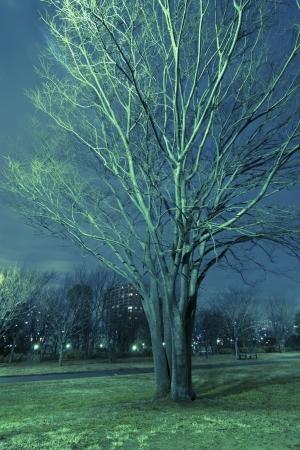 elm tree with night illumination