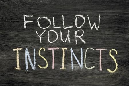 phrase: follow your instincts phrase handwritten on blackboard