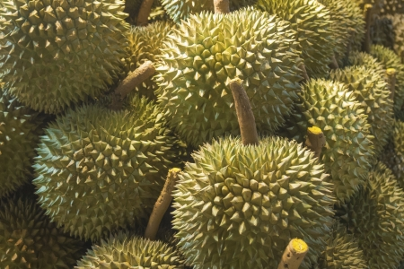 Many fresh durians  Durian is a king of fruits for many people in Southeast Asia