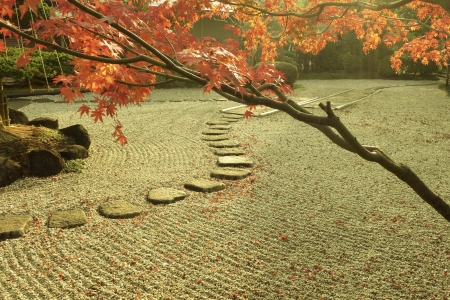 Japanese zen garden by autumn with red maple tree on foreground