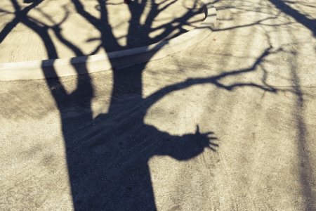 shadow of giant bare tree with stretching hand