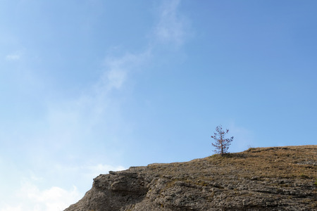 survives: small tree survives on the edge of the rocky mountain ridge