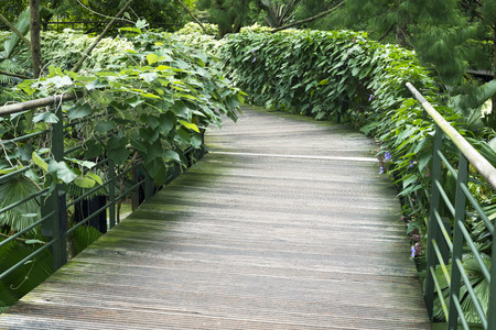surrounded: pedestrian pathway in Botanical garden surrounded by tropical plants