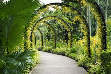 유명한 식물원에서 많은 노란 난초 꽃과 풍경의 인공 호